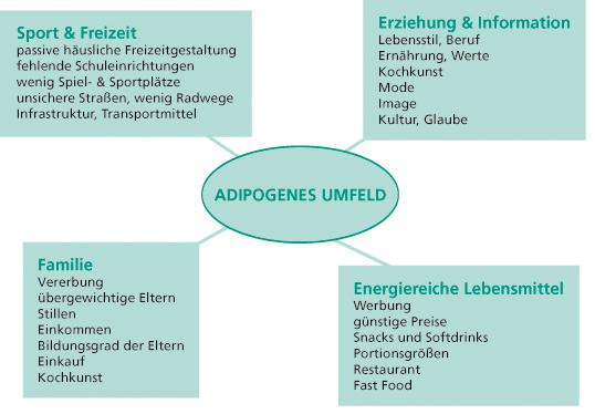 Adipogenes Umfeld
